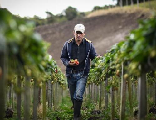 AGRO – APAG Extremadura Asaja muestra su preocupación por la posible falta de mano de obra para la recolección de las cosechas
