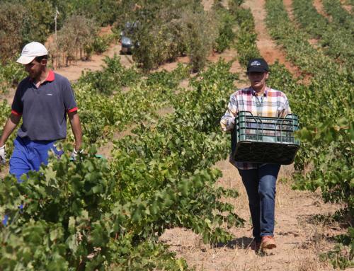 AGRO – Frente abierto del campo contra el Ministerio de Trabajo por el registro diario de la jornada laboral.