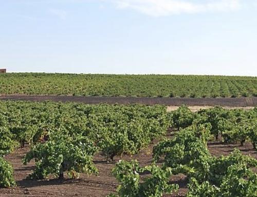 VILLAFRANCA – CAVE San José inicia una actividad enoturística para dar a conocer la historia y tradiciones de Tierra de Barros a través del vino