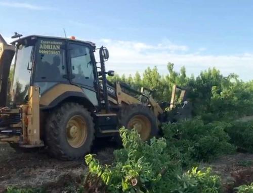 AGRO – Los efectos del nuevo Salario Mínimo: Comienza el arranque de frutales por falta de rentabilidad