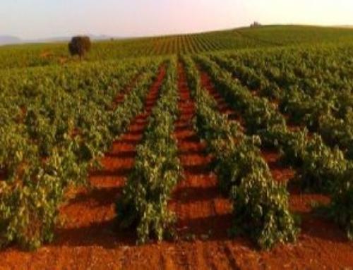 AGRO – APAG critica que el Gobierno ceda competencias a la DO del Cava para poder limitar la producción de uva
