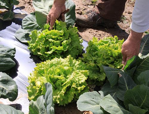 AGRO – Agricultura y Ganadería familiar para preservar la salud (7 de Abril. Día Mundial de la Salud)