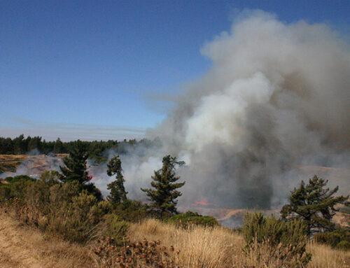 MEDIO AMBIENTE – El fuego arrasa 235 hectáreas durante esta pasada semana en Extremadura