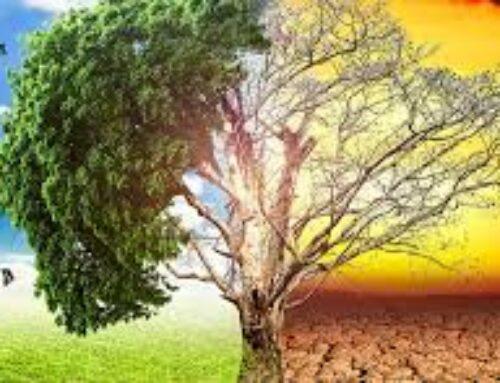 """MEDIO AMBIENTE – Un estudio de la UEx alerta del """"preocupante"""" aumento de temperaturas previsto en Extremadura para las próximas décadas"""