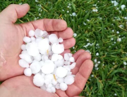 REGIÓN – Técnicos de la Junta comienzan a visitar las zonas de cultivo dañadas por el granizo en Vegas Altas