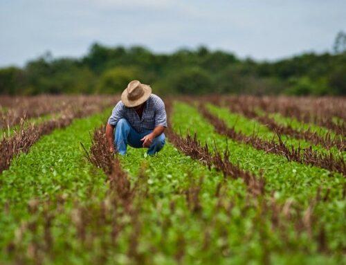 REGIÓN – Agricultura publica la convocatoria de 5 millones en ayudas para inversiones que potencien el sector vitivinícola en Extremadura