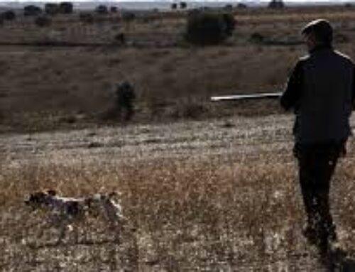 MEDIO AMBIENTE – Iniciados los trámites para crear la orden que regulará la caza en la modalidad de jabalí al salto en Extremadura