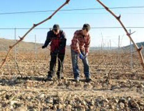 TRABAJO – CCOO recurrirá la sentencia del TSJEx que anula el convenio del campo, que afecta a 65.000 trabajadores en Extremadura