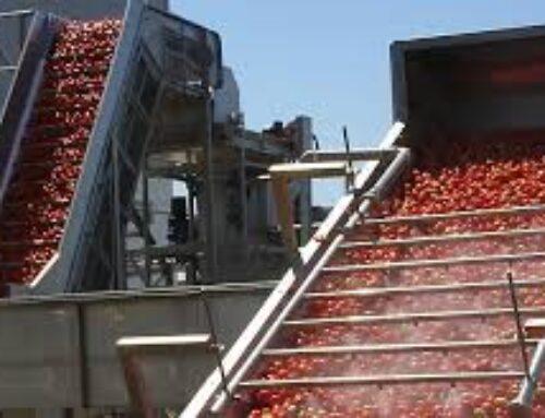 """AGRO – APAG Extremadura Asaja critica a la industria por intentar cerrar contratos de tomate """"muy por debajo"""" de su precio"""