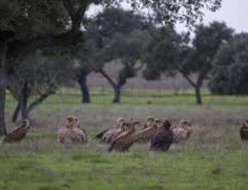 MEDIO AMBIENTE – La Dirección General de Sostenibilidad organiza este lunes, 1 de marzo, unas Jornadas Técnicas de Conservación de Aves Esteparias