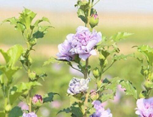 PROVINCIA – Comienza la campaña de suministro de plantas en flor a Ayuntamientos por parte del Vivero Provincial