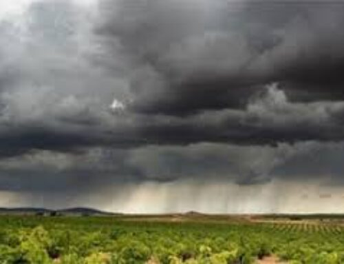TERRITORIO – Según las predicciones de la AEMET, apuntan a una primavera más cálida de lo normal
