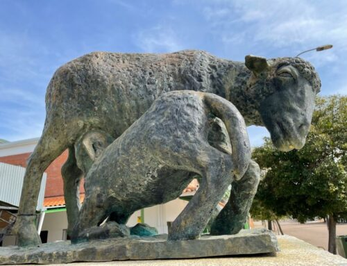 ZAFRA – La Feria de Primavera acoge este sábado una subasta virtual de ganado merino con presencia de ganaderos