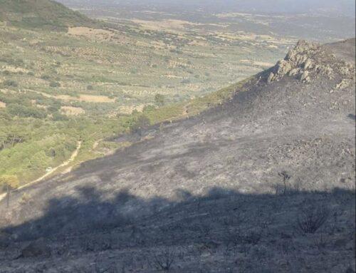 TERRITORIO – El Plan INFOEX ha intervenido en 55 incidentes durante esta semana en Extremadura de los cuales 23 han afectado a superficie forestal