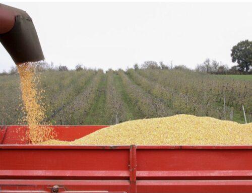 AGRO – Lo precios mayoristas de los cereales sigue al alza pero se han moderado sensiblemente las cotizaciones