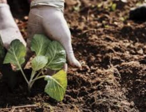 AGRO – La Consejería de Agricultura recibe más de 930 expedientes en la convocatoria 2021 de ayudas a la creación de empresas para jóvenes agricultores en Extremadura